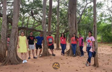 Big-Banyan-Tree-Auroville
