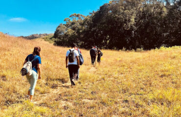 Grasslands making way into Rainforest