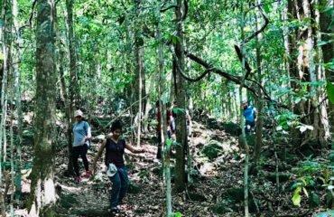 Trekking through Rainforest